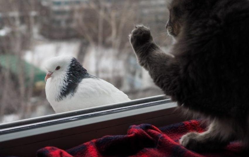 В окно постучались. Мы с женой удивленно переглянулись — живем на 11 этаже. Гость прилетел с хорошими новостями